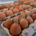 Jajka w pojemnikach ustawione tuzinami