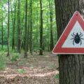 Znak Uwaga na kleszcze umieszczony na drzewie w lesie