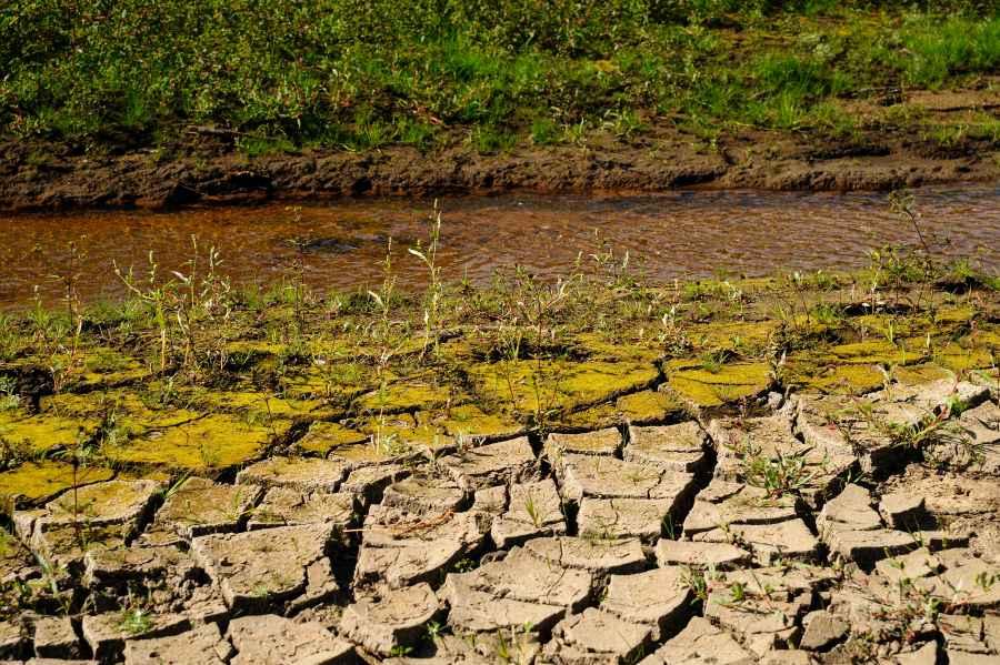 Susza – problem nie tylko rolników