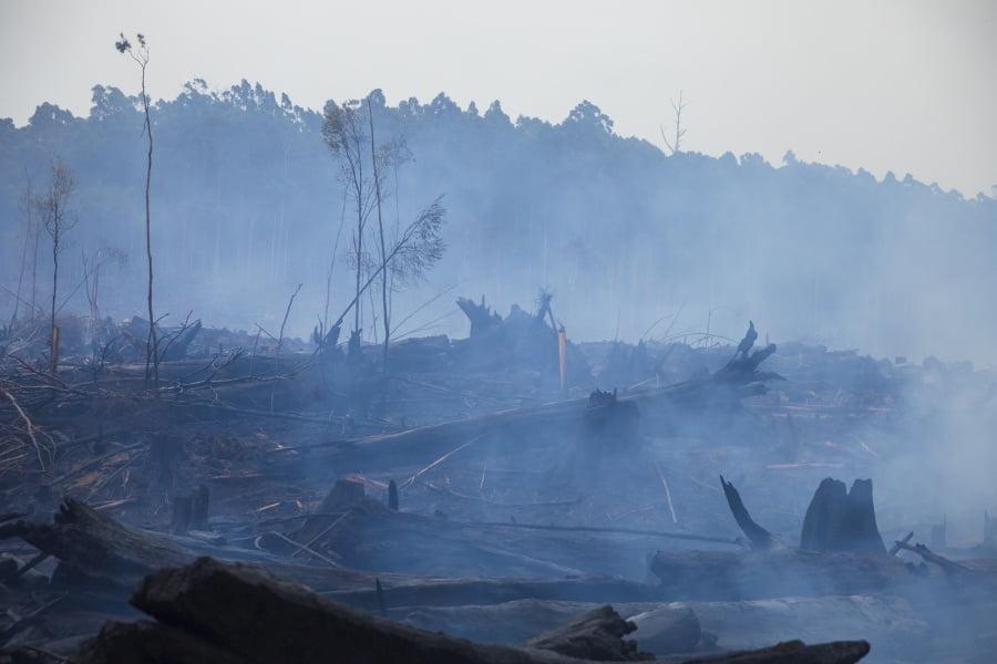 Jakie są skutki kryzysu klimatycznego?