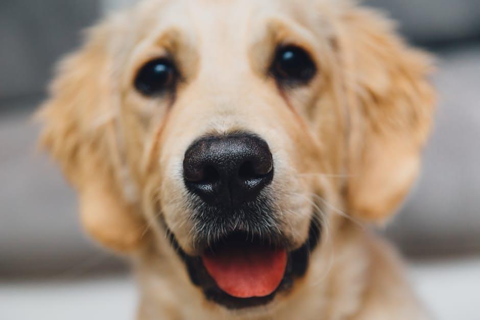 Psy wolą pochwałę niż smakołyk