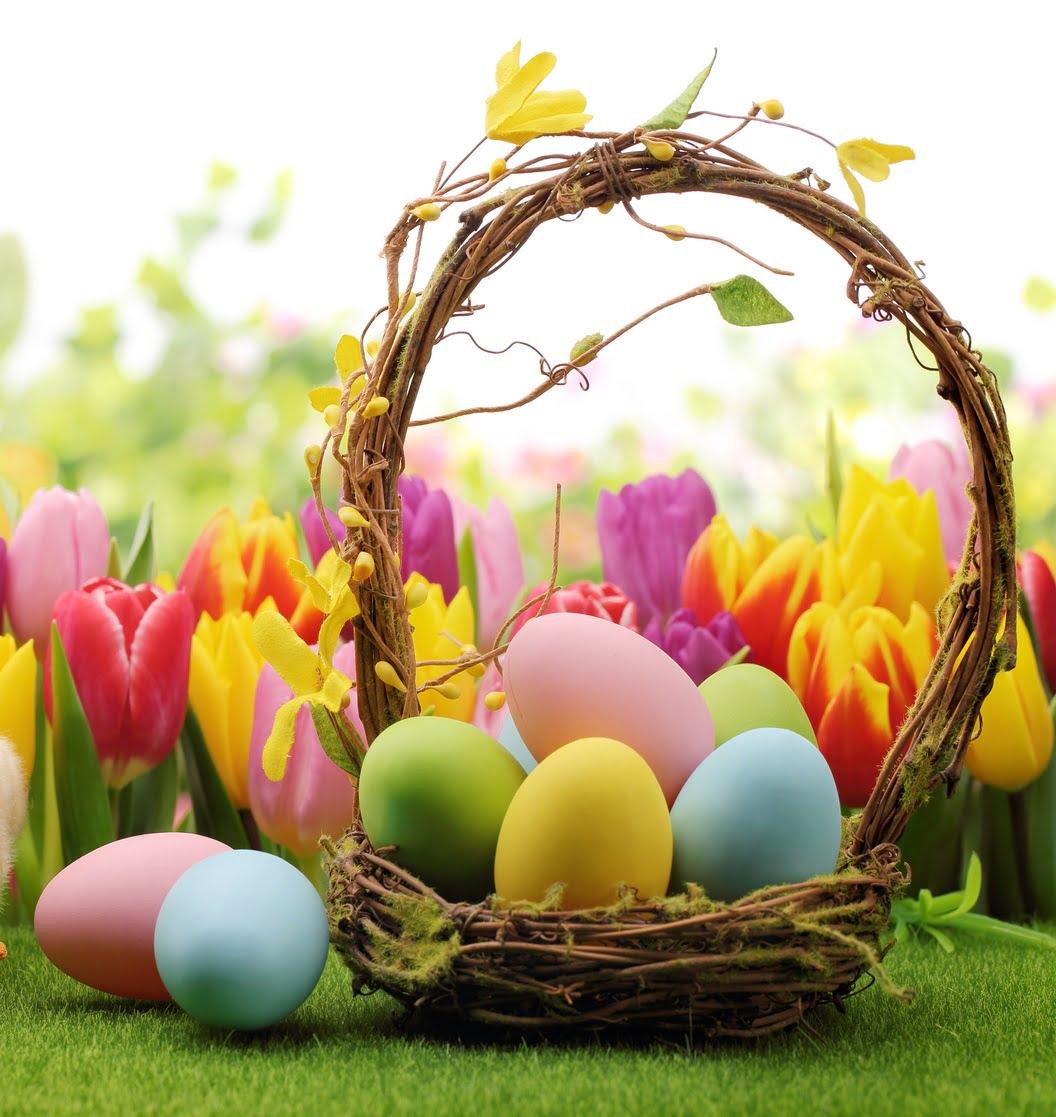 Interesujące fakty na temat jajek