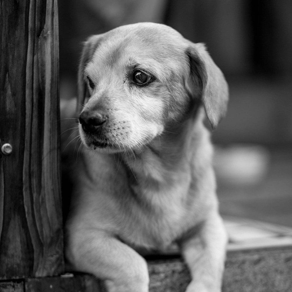 Psy jako cenieni fotomodele