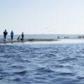 Spacer po Mewiej Rewie w Zatoce Puckiej